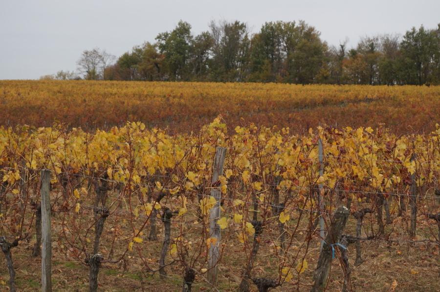 ABZAC – Terrain à bâtir 1190 m² dans un cadre viticole exceptionnel