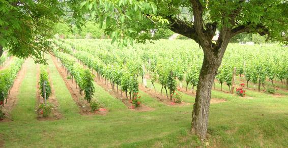 Vin de pays rosé - Prayssac