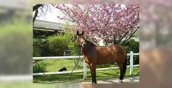 équitation - Pension de chevaux et poneys
