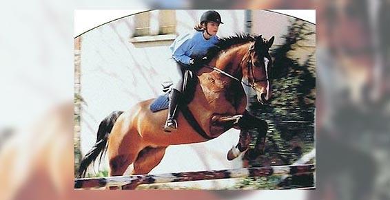 équitation - Saut d'obstacles