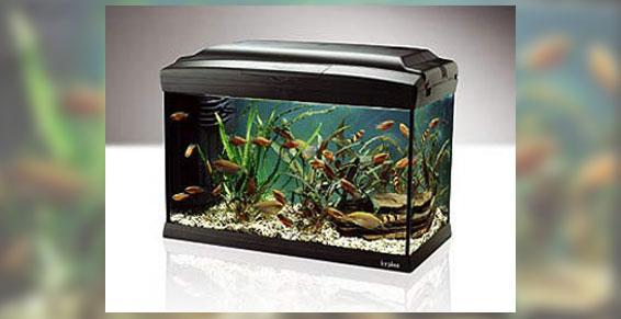 Aquariums à Cannes