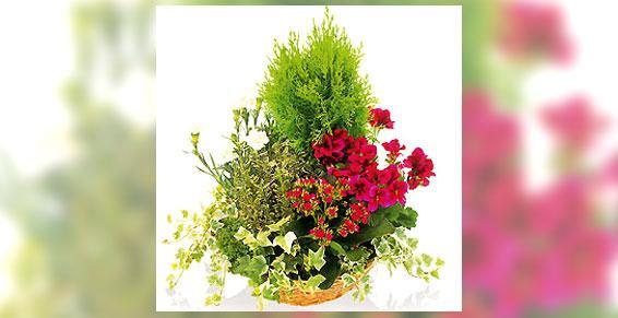 Coupe de plantes - Acacia Fleurs - Fleuriste Cannes