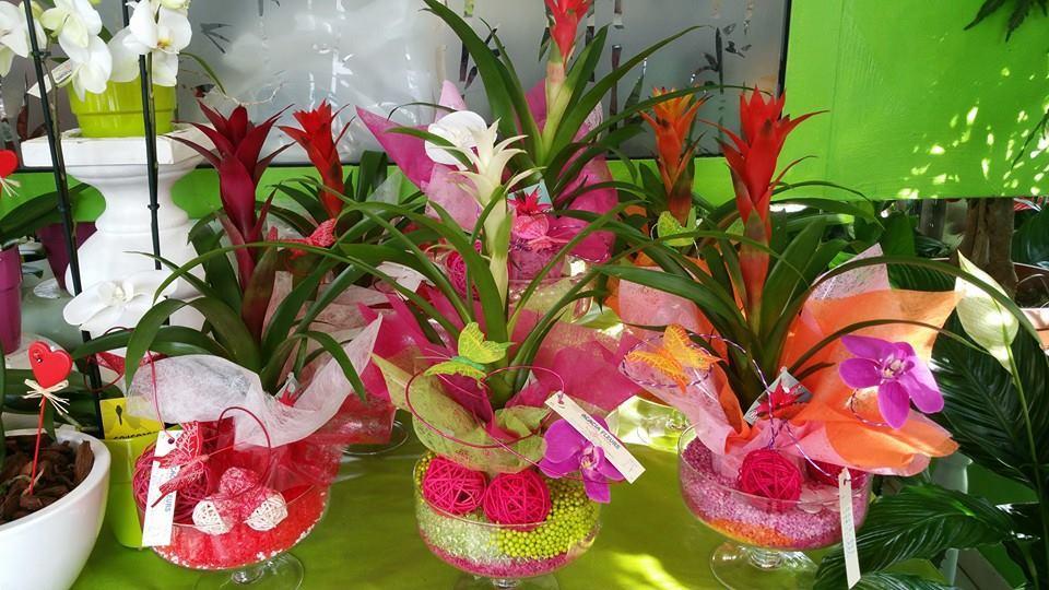 Plantes en vases - Acacia Fleurs - Fleuriste Cannes