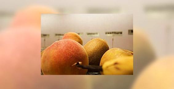 Fruits frais pour le petit déjeuner à Brest Hôtel de la Rade