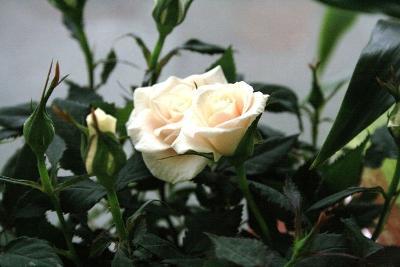 aux fleurs de l'aulne 181.JPG