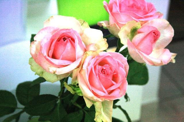 Aux Fleurs de l'Aulne, bouquets de fleurs à Châteauneuf-du-Faou (29)
