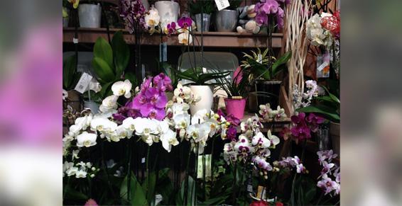 Composition fleurs coupée Garches