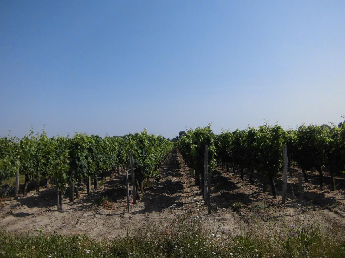 Evaluation foncière de domaines viticoles avec le Cabinet Andrexpert