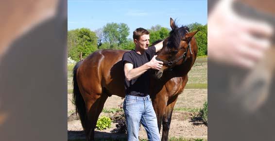 ostéopathie - cheval