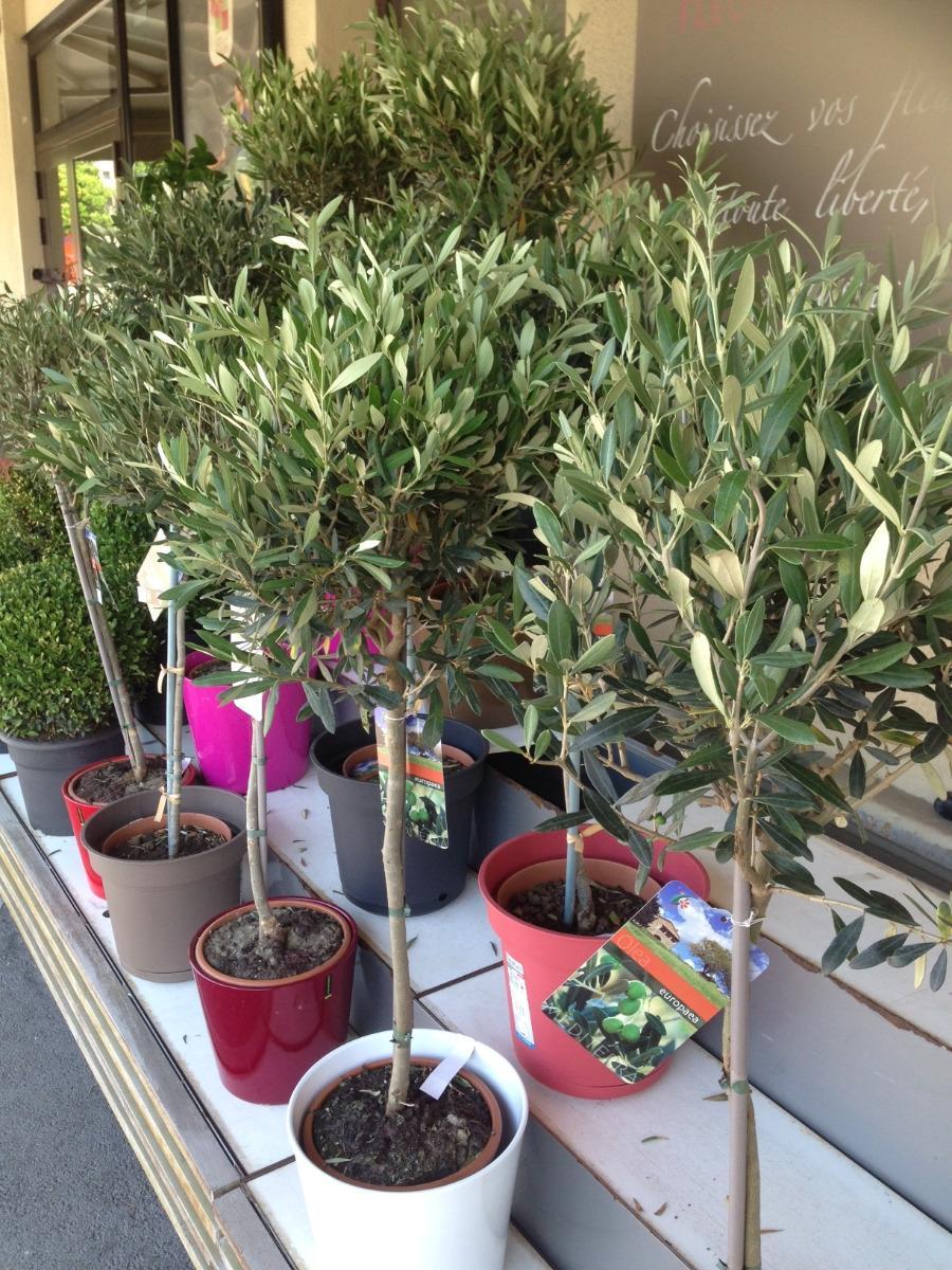 Vente d'oliviers à Ales chez Lola Fleurs
