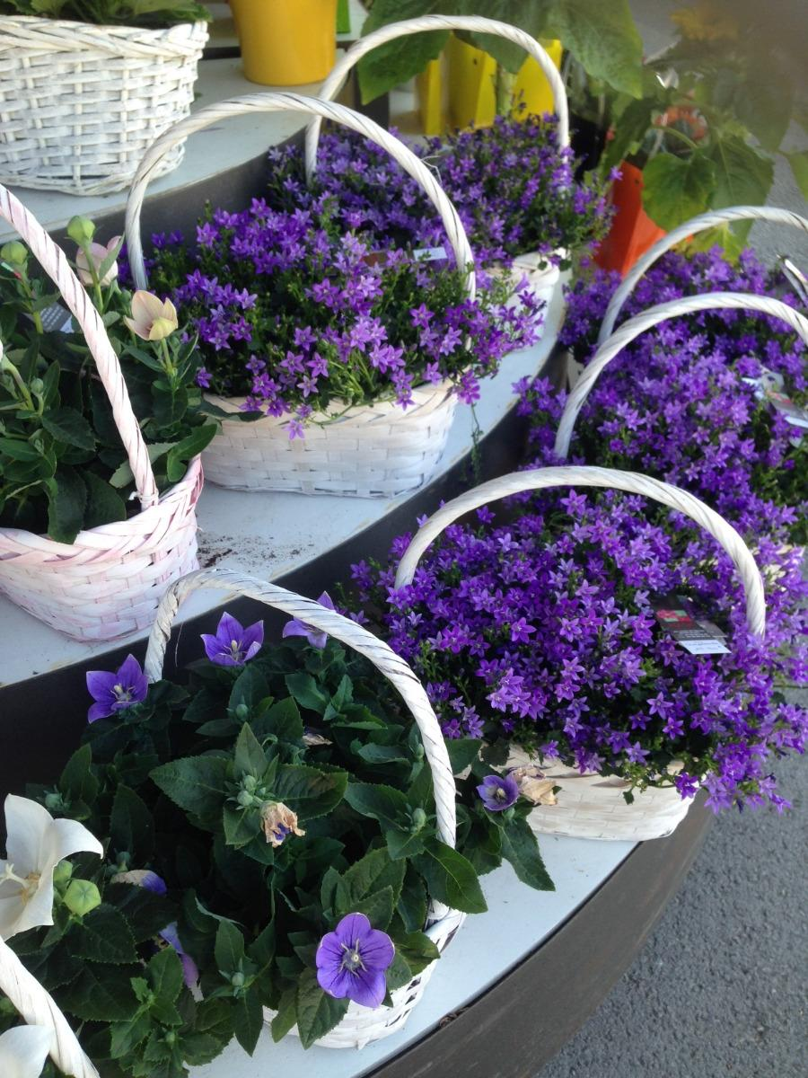 Panier de fleurs violettes Lolal Fleurs Ales