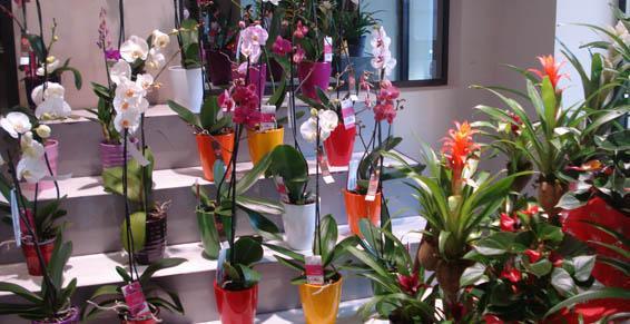 Plantes déco Lola Fleurs, fleuriste à Alès