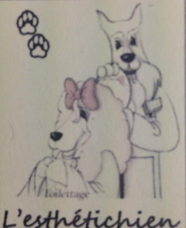 L'Esthetichien Toilettage de chien à Melgven.jpg