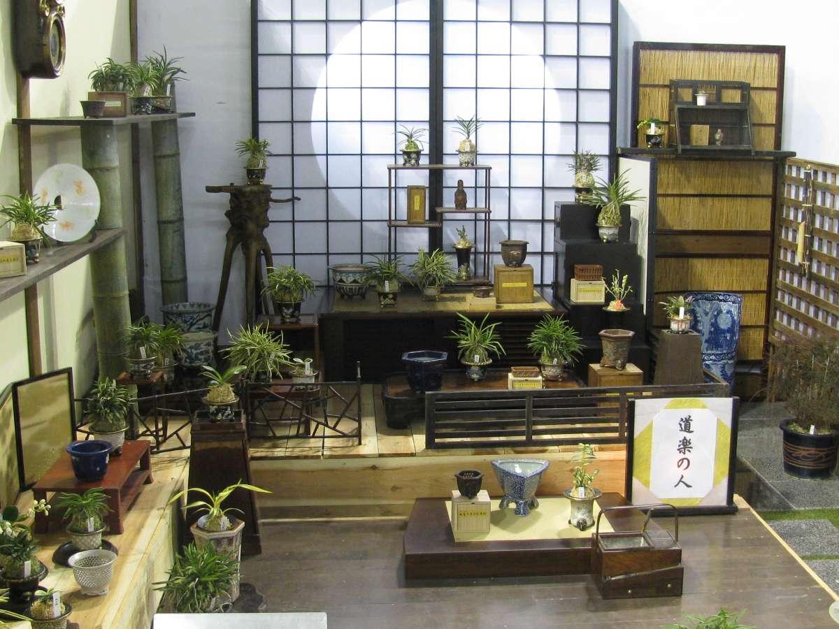 Stand Fukiran Orchid show 2015Tokyo Bonsai BARBER
