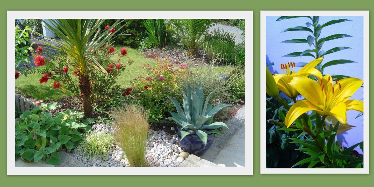 photos jardin prises par APJ