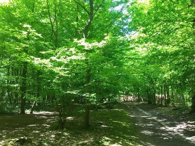 forêt St germain 1