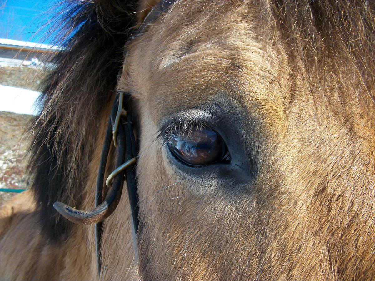 Les chevaux Le Ranch de L'Ancolie en Savoie (73