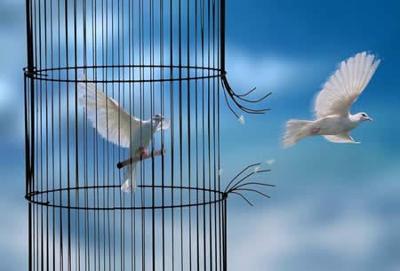 colombes.jpg