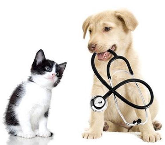 Produits vétérinaires à Draveil, Pharmacie de la Villa