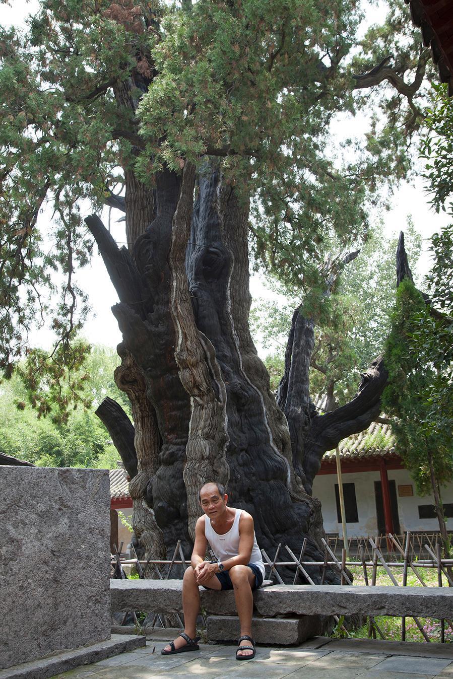 Académie Song-Yang, arbre 3000 ans