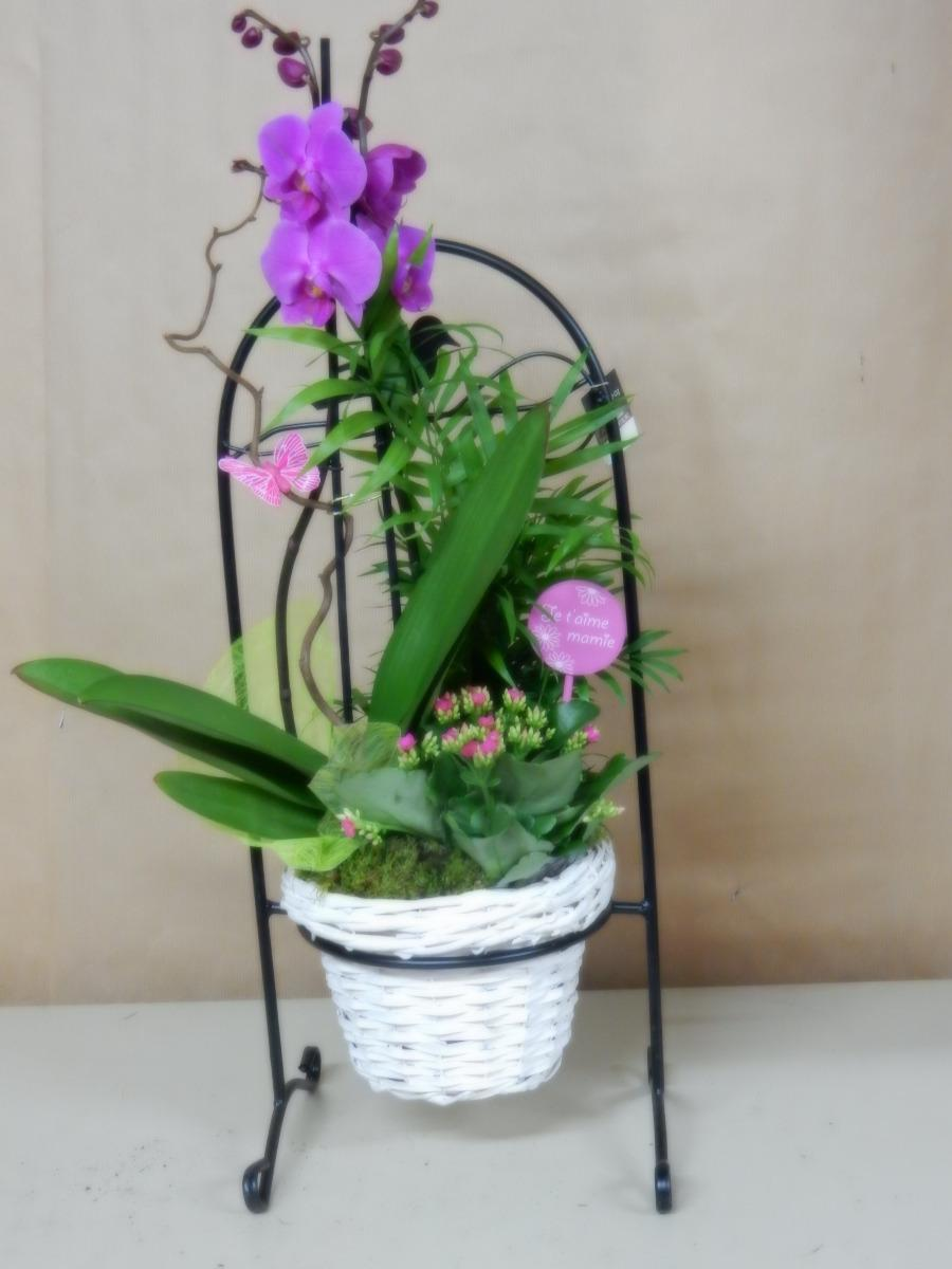 Orchidée phalaenopsis 04