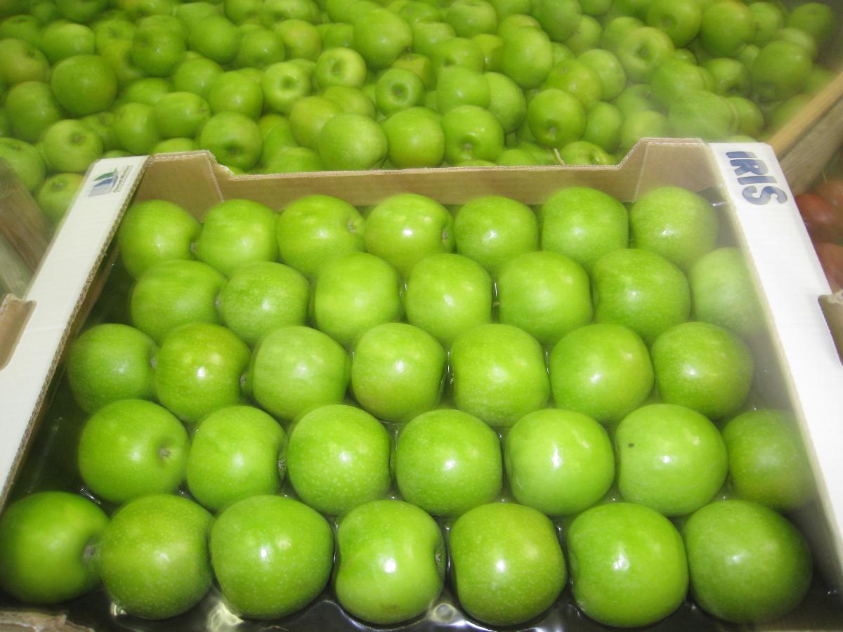 SARL Daudet Fruits à Pessines en Charente-Maritime (17), exportation de pommes