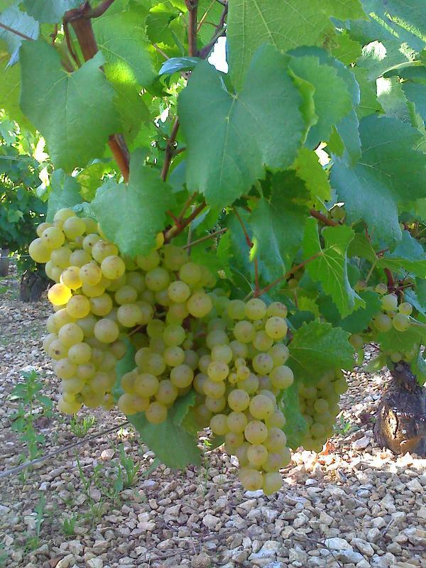 Producteur récoltant de vins