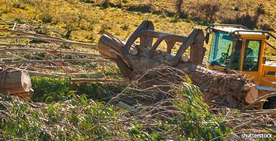 Coadebez Christophe à Momères - Hautes Pyrénées - élagage abattage