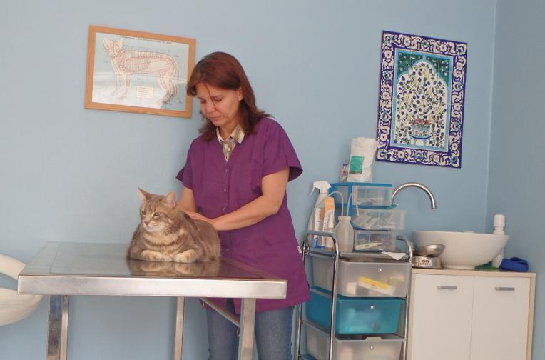 Séances d'ostéopathie pour chats